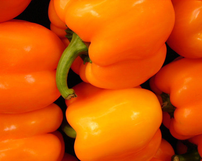 Bell peppers, Brookings, OR, Andrew D. Barron ©1/05/11