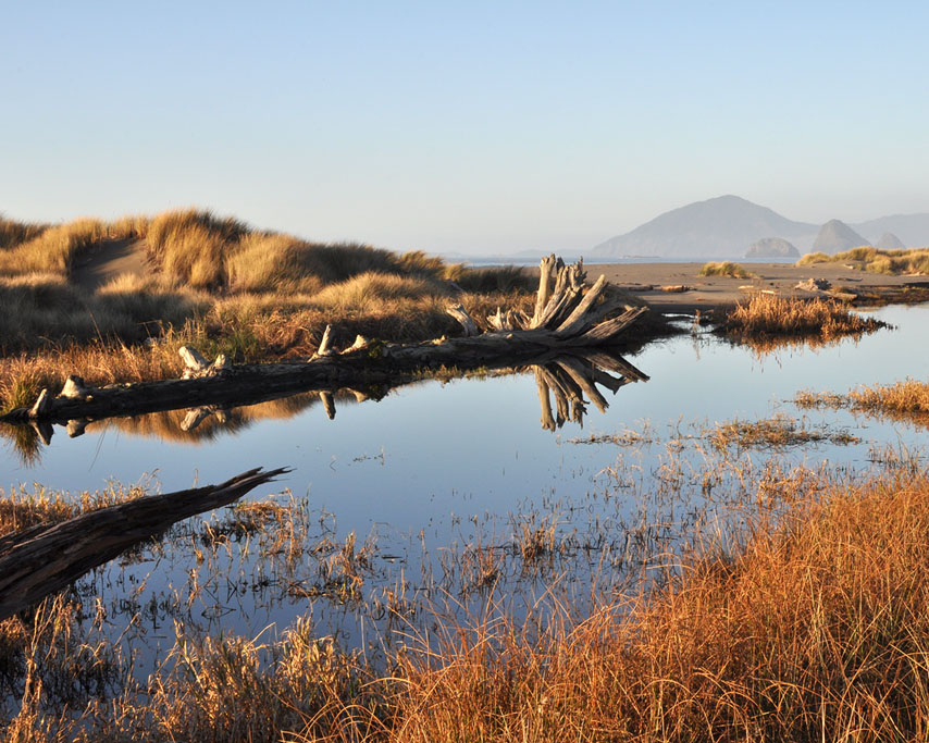 Greggs Creek marsh, Curry County, OR, Andrew D. Barron ©1/03/11
