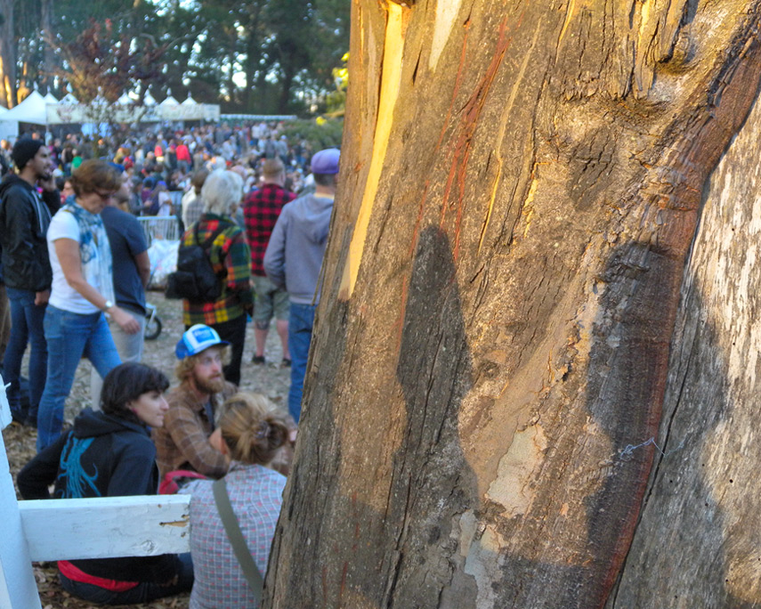 Crowd and eucalyptus at Hardly Strictly Bluegrass festival, Golden Gate park, Andrew D. Barron©9/30/11