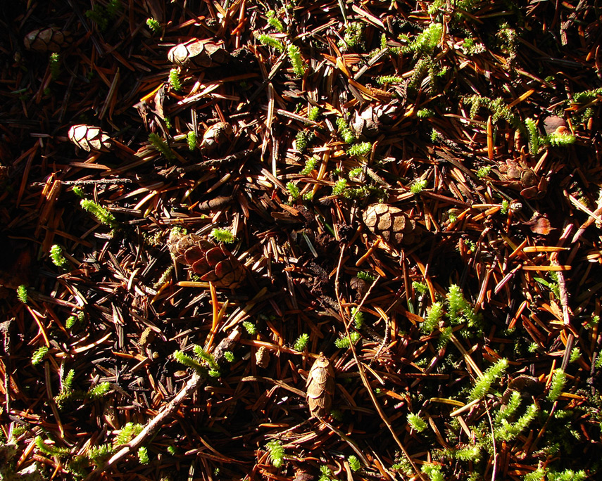 Ground cover, Marble Mountain, Andrew D. Barron©10/25/11