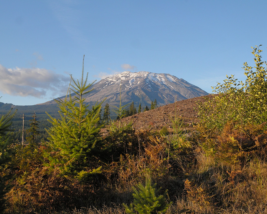 southern slopes of Mount St. Helens, Andrew D. Barron©10/25/11