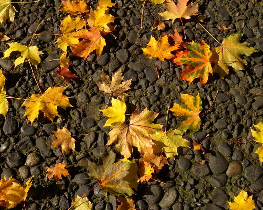 Sidewalk, Camas, WA, Andrew D. Barron©10/29/11