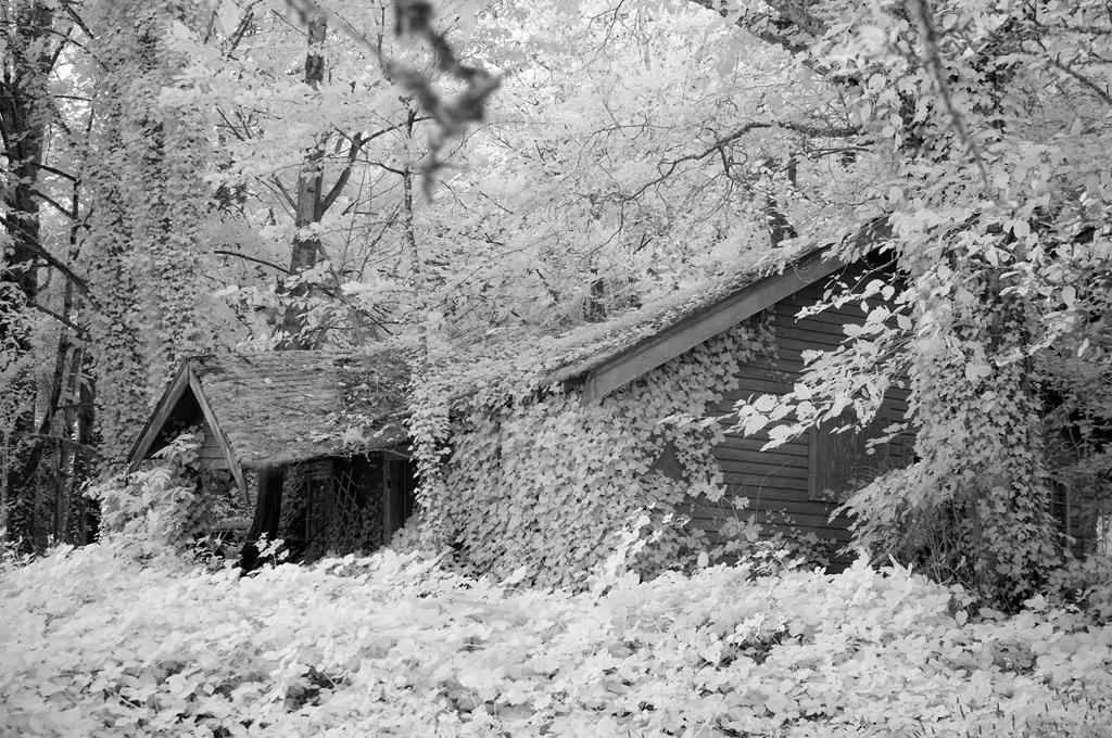 Corbett, OR, Andrew D. Barron©10/15/11