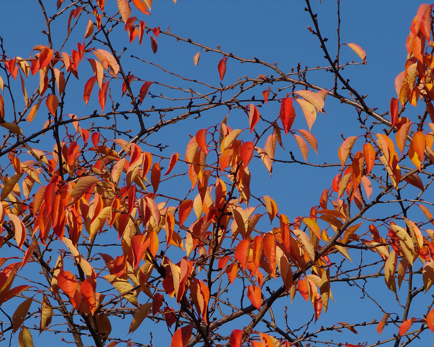 Vancouver leaves, Andrew D. Barron©11/15/11