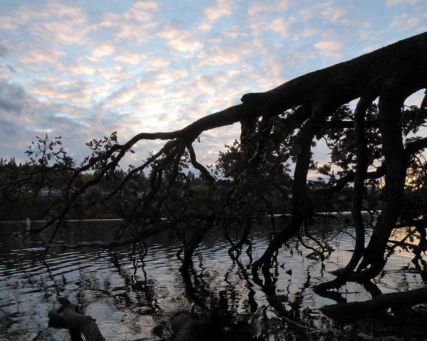Lacamas Lake, Andrew D. Barron©11/19/11