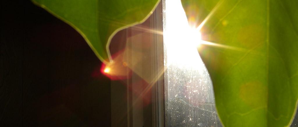 Umbrella plant sun, Andrew D. Barron©2/17/11