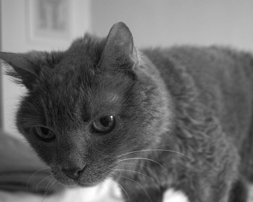 Smoke, the retired Curry Public Library cat, Andrew D. Barron ©3/4/11