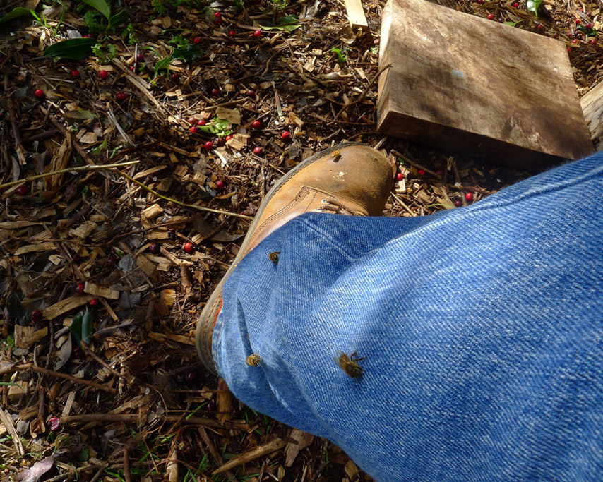 The moon above woodsmoke, Andrew D. Barron ©3/10/11