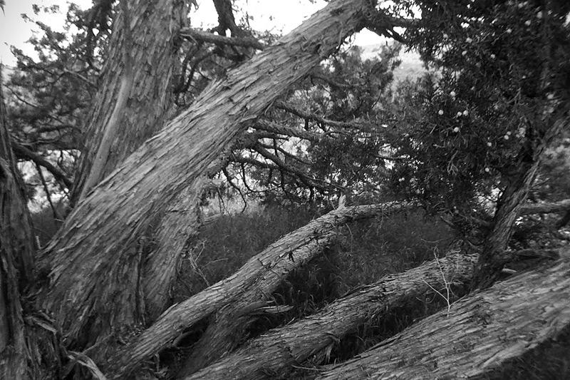Red Rocks California, Andrew D. Barron©6/5/11