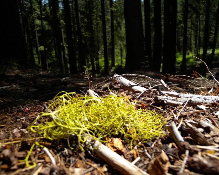 Forest floor, Johnsville cabin, Andrew D. Barron©7/9/11