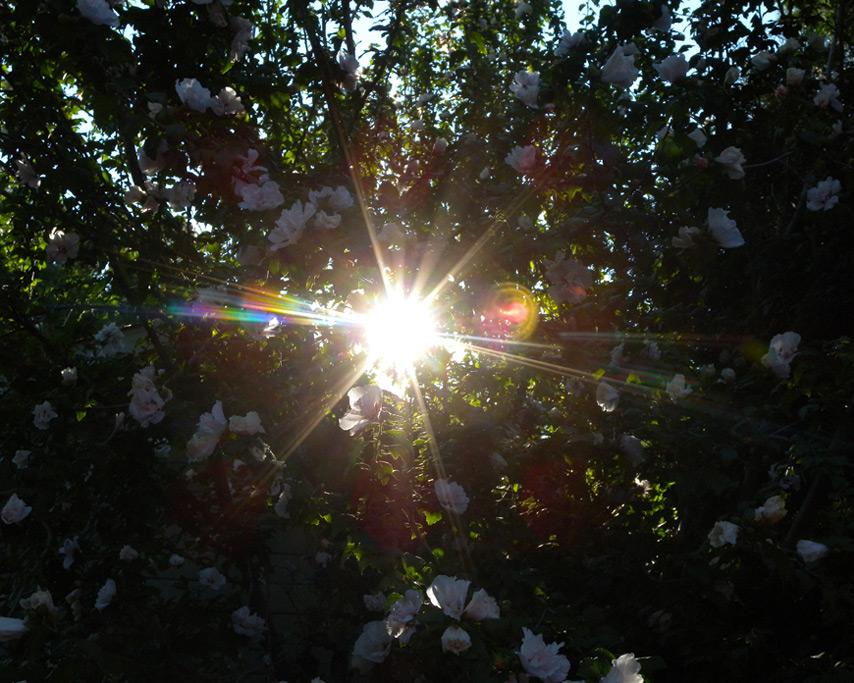Flowers, Andrew D. Barron©7/16/11