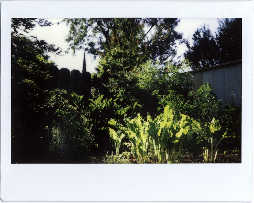 Backyard garden, Andrew D. Barron©7/16/11