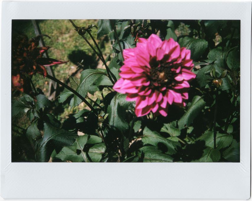 Garden flowers Agness, OR, Andrew D. Barron©7/25/11