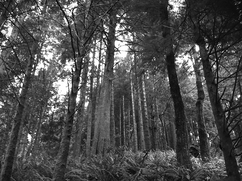 Humbug trail, Curry county, OR, Andrew D. Barron©4/9/12 [Iphone 3G, Vint B&W]