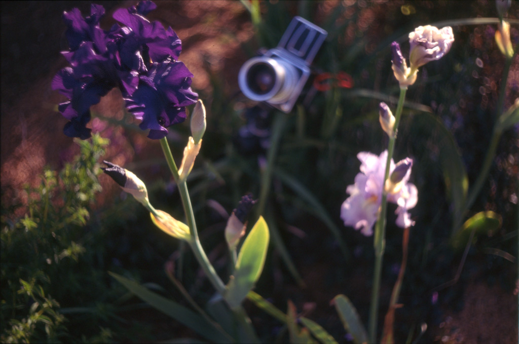 Leica shoots the iris being shot by the Hasselblad, Andrew D. Barron©5/20/12