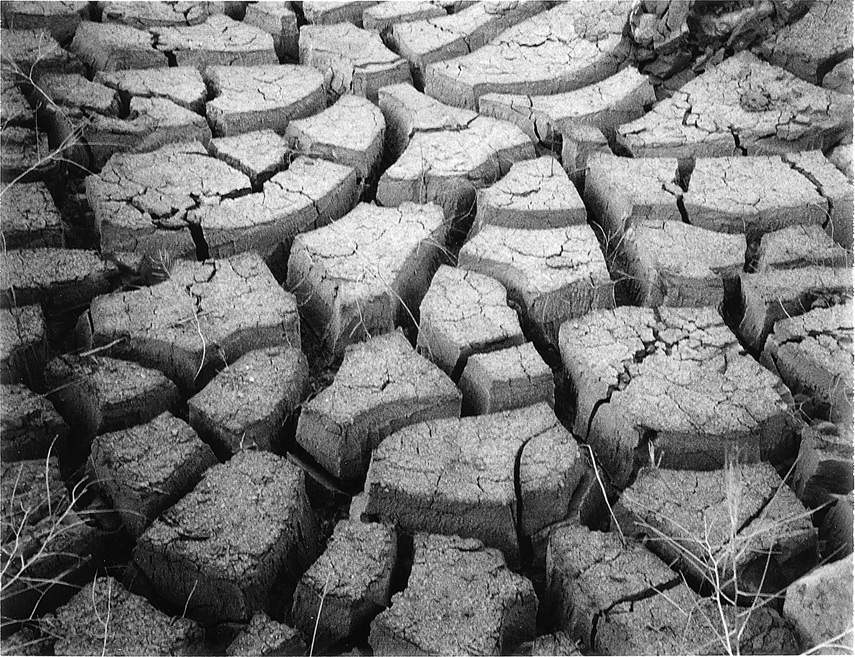 Huge mud cracks, Virginia City foothills, NV, Andrew D. Barron©9/20/12 [Land Camera 320:Pack 5 shot 2 (FP3000B)]