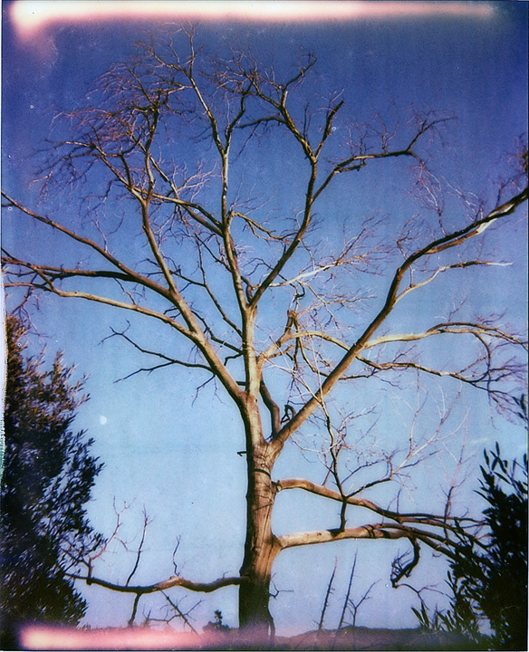 Moon on the tree's shoulder, Andrew D. Barron©9/27/12 [Polaroid Spectra: Pack 2 shot 6 (TIP PZ680 color shade cool)]