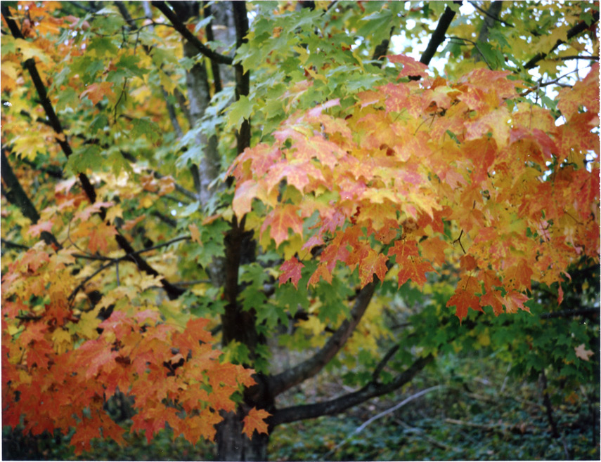 Super 8 foliage, New Paltz, NY, Andrew D. Barron©10/9/12 [Land Camera 330:Pack 4 shot 2 (FP100C)]
