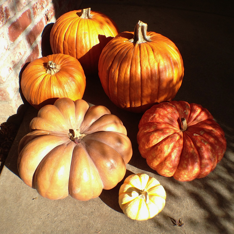 Chico front porch pumpkins, Andrew D. Barron©11/23/12 [iPhone 4S, 6x6, mCAM lite]